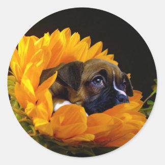 Boxer puppy in Sunflower stickers