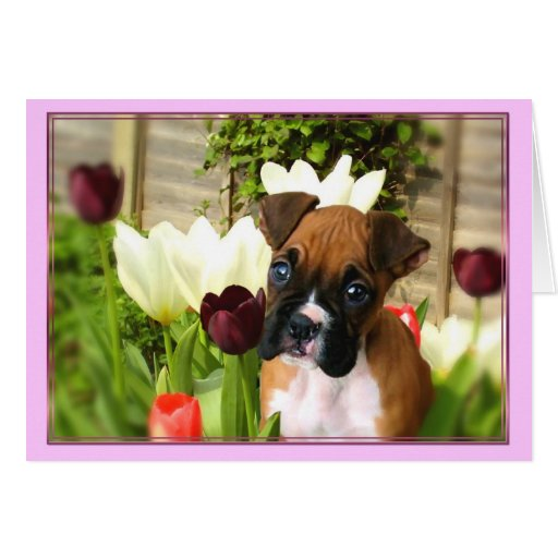 Boxer puppy in Tulips Notecard