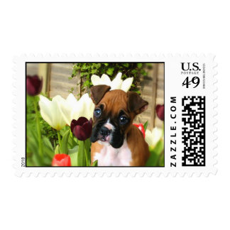 Boxer puppy in tulips postage