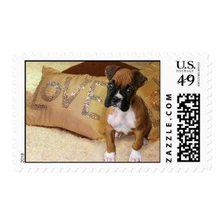 Boxer puppy love postage