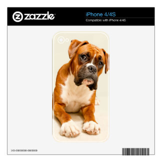 Boxer puppy on ivory cream backdrop. iPhone 4S skin