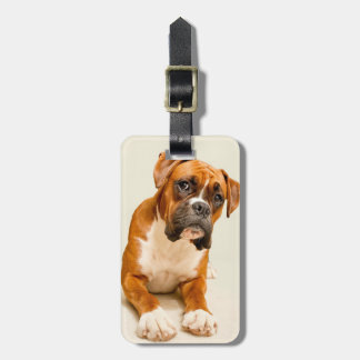 Boxer puppy on ivory cream backdrop. tags for luggage
