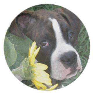 Boxer Puppy Peeking around Sunflowers Plate