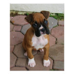 Boxer puppy poster