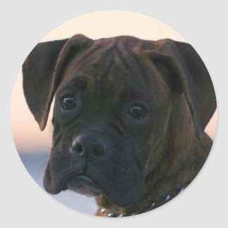 Boxer Puppy stickers