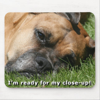 Boxer:  Ready for close-up Mouse Pad