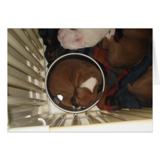 Boxer Sleeping in Food Bowl Birthday Card
