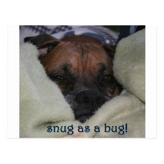 Boxer:  Snug as a Bug Postcard