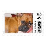 Boxer Stamp