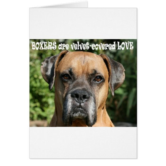 Boxer:  Velvet-covered Love Card