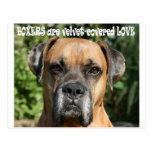 Boxer:  Velvet-covered Love Post Card