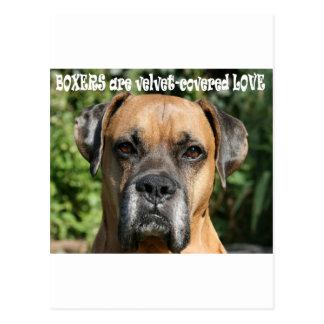Boxer:  Velvet-covered Love Postcard