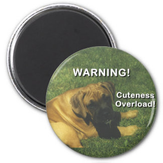 Boxer: Warning! Cuteness Overload! Magnet