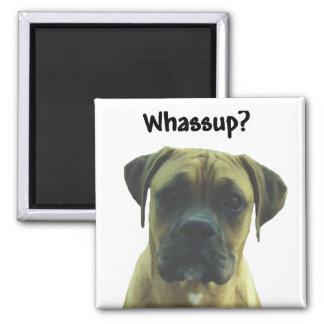Boxer:  Whassup? Magnet