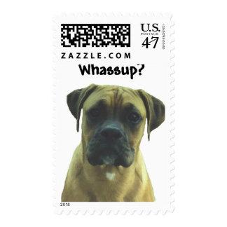 Boxer:  Whassup? Postage
