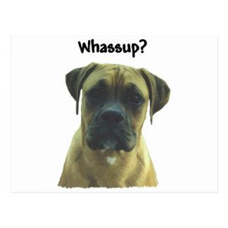 Boxer:  Whassup? Postcard