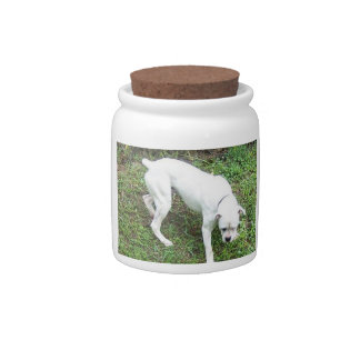 Boxer White Puppy full Candy Dish