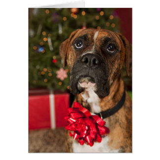 Boxer with bow on neck card