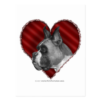 Boxer with Heart Postcard