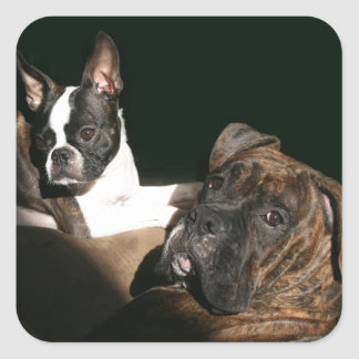Boxers and Bostons: Awesome Twosome 2 Square Sticker