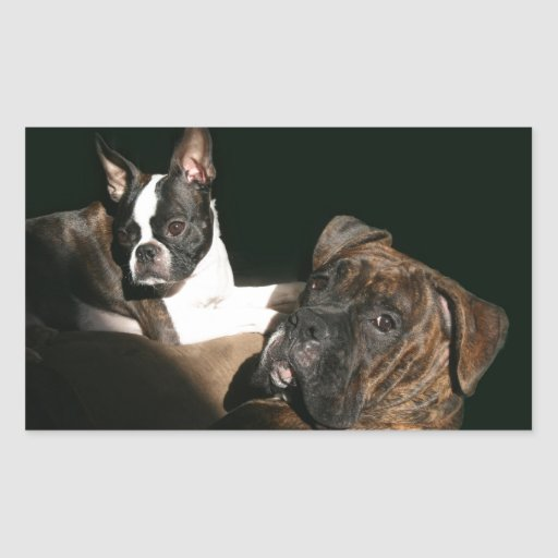 Boxers and Bostons: Awesome Twosome 2 Rectangular Sticker
