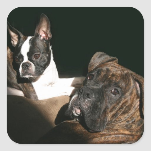Boxers and Bostons: Awesome Twosome 2 Stickers