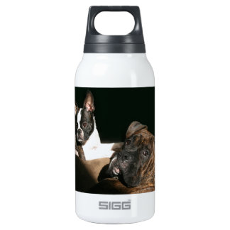 Boxers and Bostons: Awesome Twosome 2 Thermos Bottle