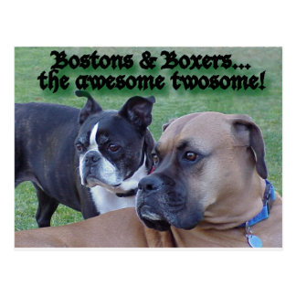 Boxers and Bostons Postcard