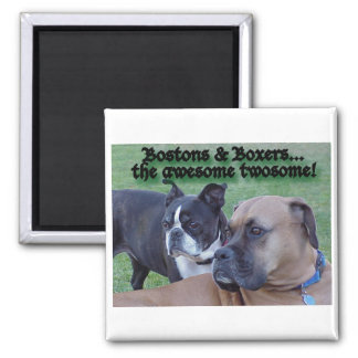 Boxers and Bostons: The Awesome Twosome Magnet