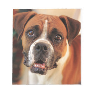 boxer's face weeping of friendly behavior note pad