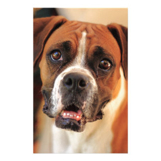 boxer's face weeping of friendly behavior stationery