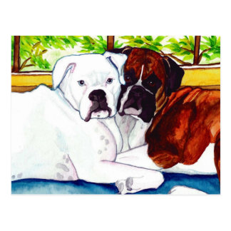Boxers Fawn and White Postcard
