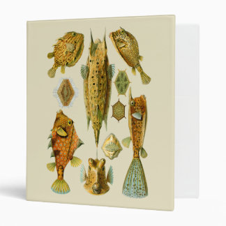 Boxfish o Cowfish Carpeta 1""