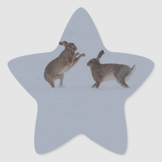 Boxing hares star sticker