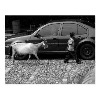 Boy and Goat, La Antigua Guatemala Postcard