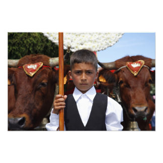 Boy and oxen photo art