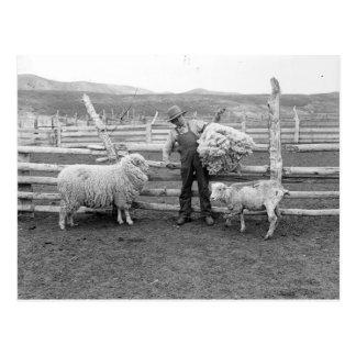 Boy holding up a bundle of wool postcard