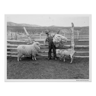 Boy holding up a bundle of wool poster