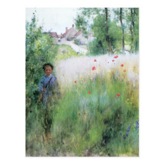 Boy in the Meadow Postcard