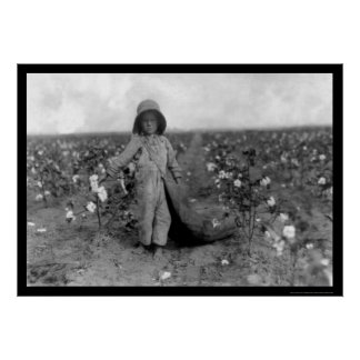 Boy Picking Cotton in Comanche, OK 1916 Poster
