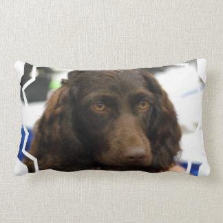 boykin-spaniel-2.jpg lumbar pillow