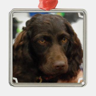 Boykin Spaniel  Ornaments