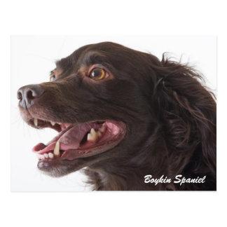 Boykin Spaniel Photo Post Card
