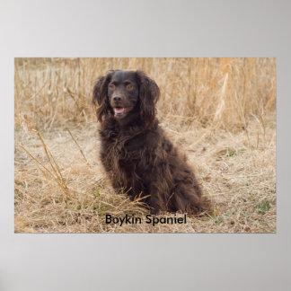 Boykin Spaniel Poster