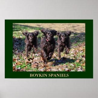 Boykin Spaniels Poster