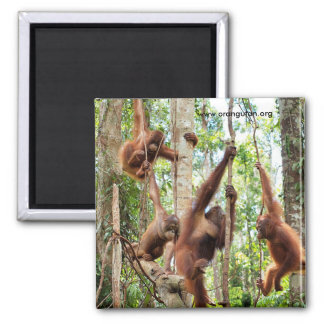Boys in the Rainforest Hood 2 Inch Square Magnet