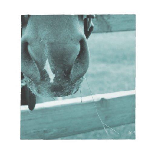 bozal del caballo con el azul de la cerca del heno blocs de papel