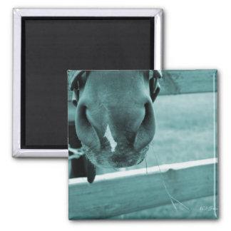 bozal del caballo con el azul de la cerca del heno imán cuadrado