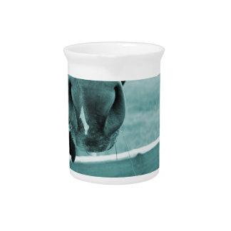 bozal del caballo con el azul de la cerca del heno jarra de beber