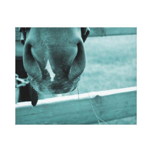 bozal del caballo con el azul de la cerca del heno impresión de lienzo